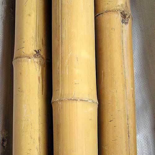 Бамбук Китай 3 - 4 см. 4 метра