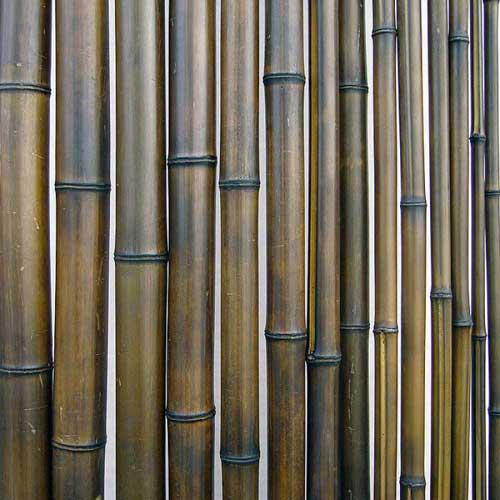 Бамбук ствол шоколад 4 - 5 см. Фото.