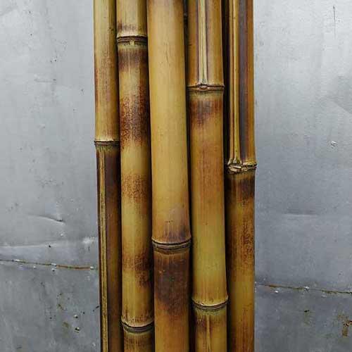 Бамбук хаотичный 3 - 4 см