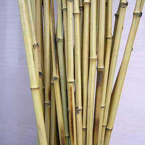 Бамбук удочка. Хлысты бамбука.