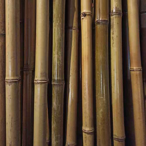 Бамбук натуральный 1,8-2,5 см