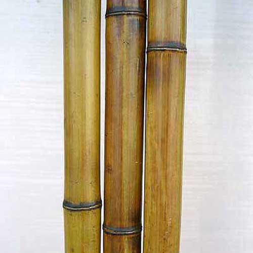 Бамбук ствол стандарт 3-4 см