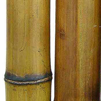 Бамбук натуральный 7-8 см