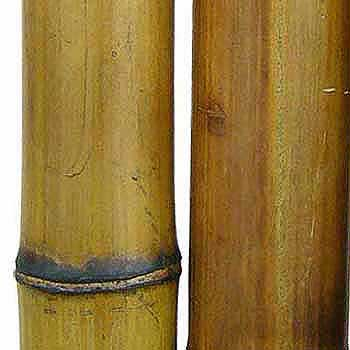 Бамбуковый ствол стандарт. Диаметр 7 - 8 см.