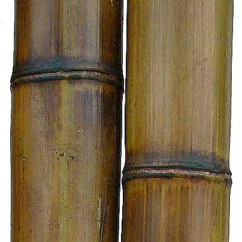 Бамбук натуральный 8-9 см