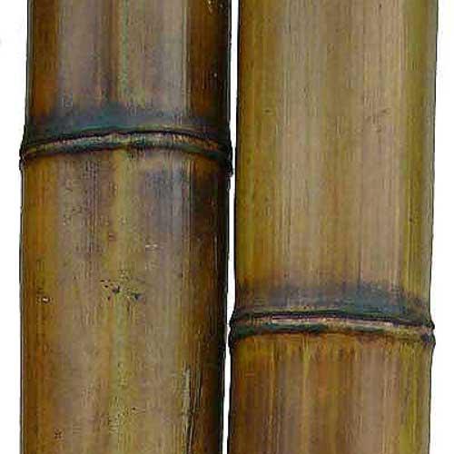 Бамбук натуральный 9-10 см