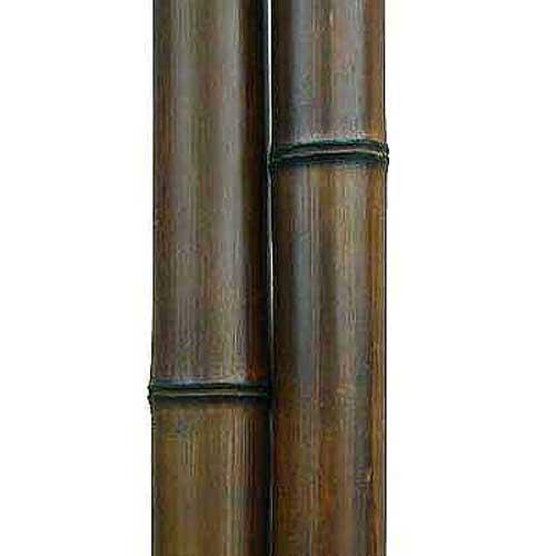 Бамбук шоколад 6-7 см