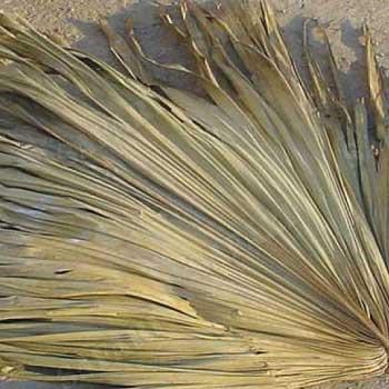 Пальмовый лист