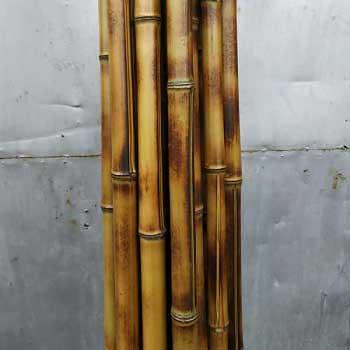 Бамбук хаотичный 2 - 3 см
