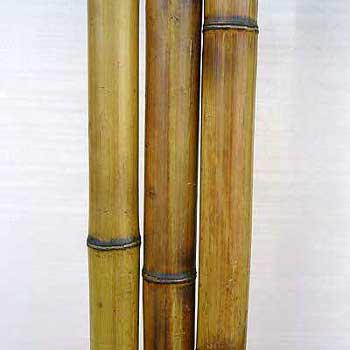 Бамбук ствол стандарт 3 - 4 см