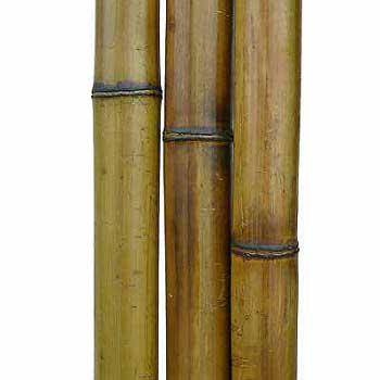 Бамбук ствол стандарт 4 - 5 см