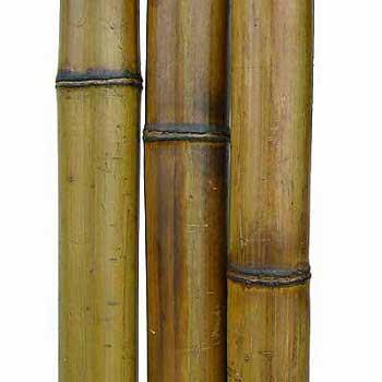 Бамбук ствол стандарт 5 - 6 см