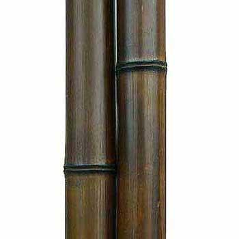 Бамбук ствол шоколад 6 - 7 см