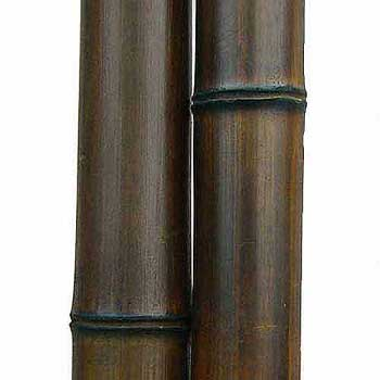 Бамбук ствол шоколад 7 - 8 см