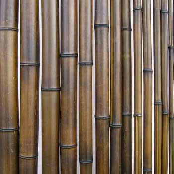 Бамбук ствол шоколад 1,5 - 2 см