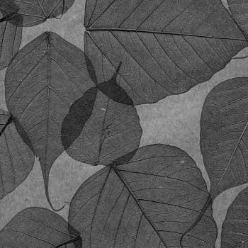 Натуральные обои  Листья Прима Ахумадо 10 м