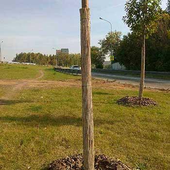 Тростниковая оплётка для деревьев
