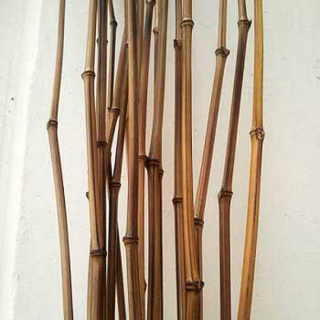 Бамбук удилище натуральное