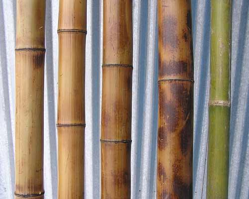 Бамбук. Стволы бамбука. Бамбуковые опоры, палки