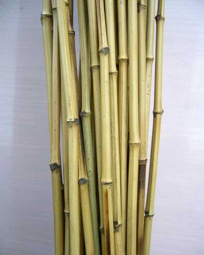 Бамбуковый ствол стандарт. Диаметр 1,5 - 2 см.