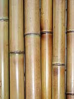 Бамбук термообработанный