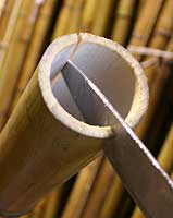 Колем бамбук