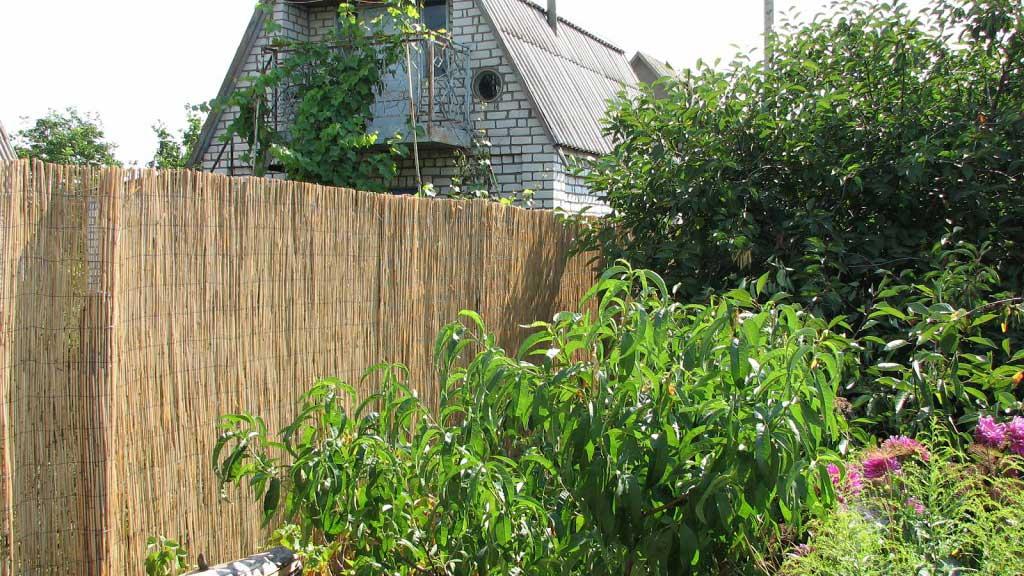 Забор на даче из тростниковых матов
