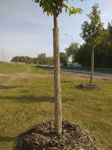 Тростниковые маты для защиты деревьев