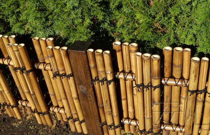 невысокая ограда из бамбука