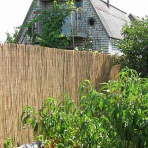 Забор на даче из<br />тростниковых матов