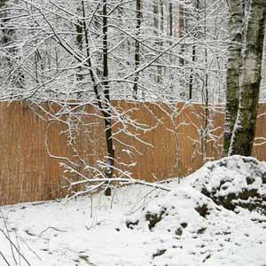 Тростниковый забор на сетке рабица