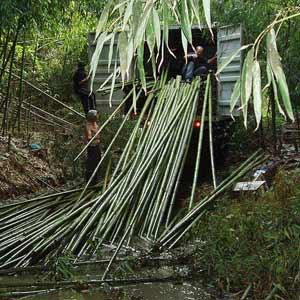 Заготовка бамбука детали