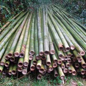 Заготовка бамбуковые<br />стволы