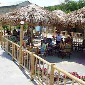 Бамбук и пальмовый лист