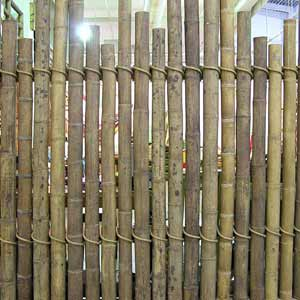 Панамский бамбук в качестве забора